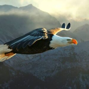 Eternal Eagles
